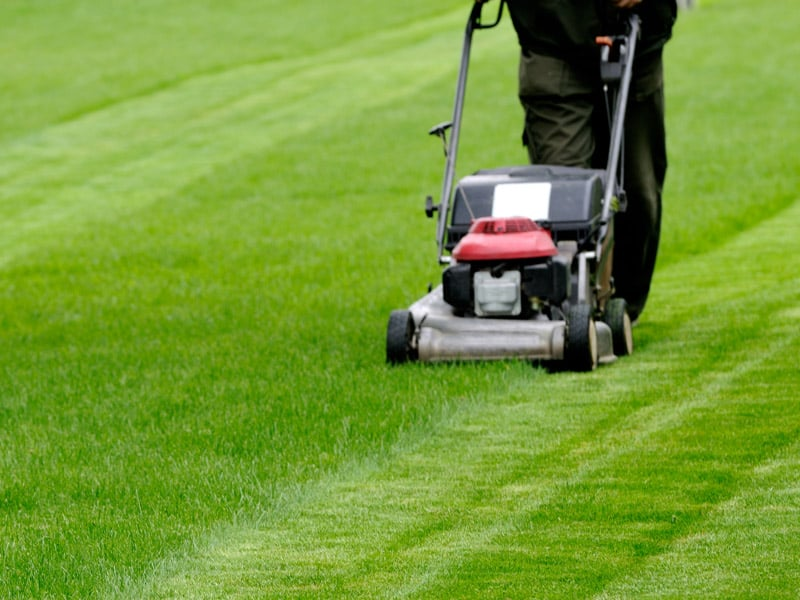Lawn Care In Sydney
